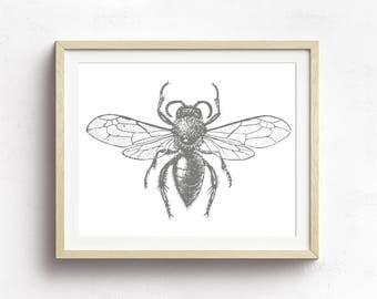 Bee Print, Bee Art, Nature Illustration, Queen Bee, Insect Print, Vintage Bee Print