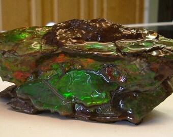 Ammolite Specimen from Utah Deposit Stabilized and Coated Gemstone  Red Green Yellow Fire Specimen 039 G