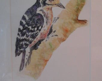 Lesser spotted woodpecker  original  painting