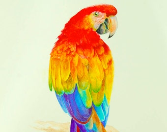 Parrot Painting Red Macaw Parrot Watercolor Colorful Bird Wall Art Decor Tropical Parrot Original Watercolor Unique Gift For Bird Lover