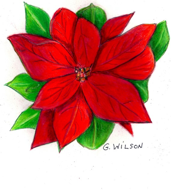 Say It With A Poinsettia