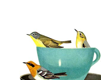 Warbler wake-up call. Limited edition collage print by Vivienne Strauss.