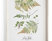 Fern Study Vol.2 - Scientific illustration. Beautifully textured cotton canvas art print.  Large scale art