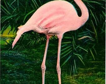 Vintage Florida Postcard - The Graceful Flamingo (Unused)