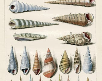 Sea Shell Print, Rare 1772 Engraving of Auger (Vis) Shells by Dezallier d'Argenville Conchyliologie Hand Coloured Shell Engraving