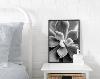 Velvet Succulent A3 Art Print, Black & White Poster