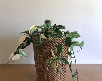 wicker basket   plant container