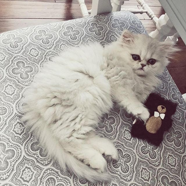 Plush Cat Toy | Luxury Cat Gift | Embroidered Bear | Cat Gift ...