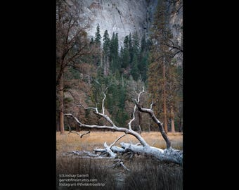 Landscape Photograph - Yosemite Valley - California - Color Fine Art Photograph - Wall Art Color Art Print