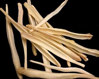 Coyote Oosik Bone