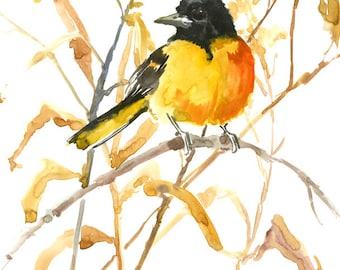 Bird Yellow Artwork Baltimore Oriole, bird art, original watercolor, yellow black wall art, birds, birds of america, birds and flowers