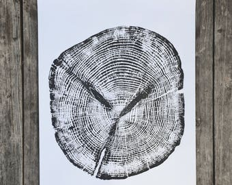 Alaskan Cedar, Ketchikan Alaska, Tree Ring Art Print, Tongass Forest Cedar, gift for guys, fathers day, dad gifts, Real Tree Stump Art