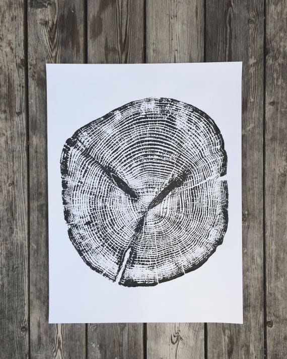 Alaskan Cedar, Ketchikan Alaska, Tree Ring Art Print, Tongass Forest Cedar, gift for guys, fathers day, dad gifts, Real Tree Stump Art
