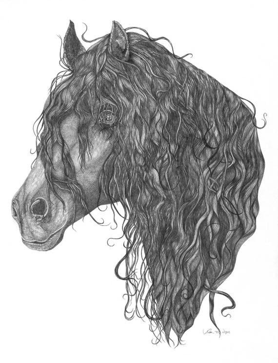 Frisone cavallo matita disegno stampa gicl e di 8 x 10 for Disegni di cavalli a matita