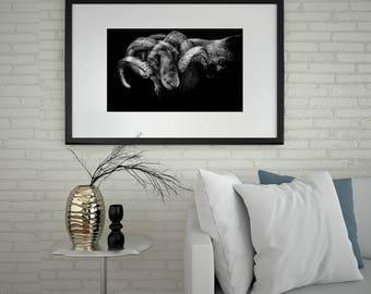 Ram Picture, Ram Print, Ram Antlers, Ram Art, Ram Horns, Male Sheep, Sheep, Ram Framed, Sheep Canvas, Ram Sheep (Reggie Ram) Sells UK/USA