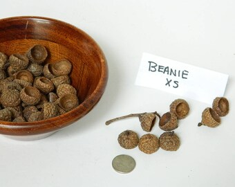 Natural Acorn Caps for Crafting - Arts and Crafts Supplies - Felted Acorn Caps - Potpourri Supply - Rustic Wedding Decor - Natural Ornament