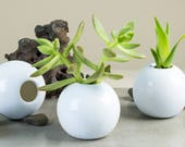 2 Mini Succulent planters White modern ceramic planter Round cactus plant pot Home desk decor Handmade pottery Planters housewarming gift