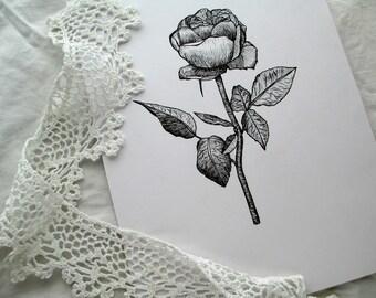 Rose Flower Illustration Giclee Print