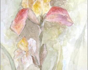 Yellow-Pink Iris - Original Watercolor Painting - 8,3x13 inch