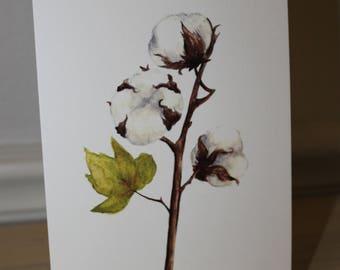 Cotton Blossom 5x7 Watercolor Print