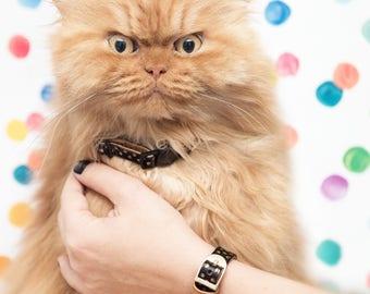 FriendshipCollar Cat Collars & Matching Bracelet