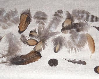 Assorted Small Chicken Feathers