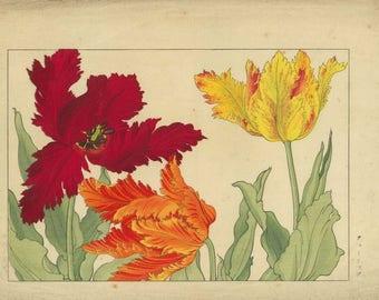 ANTIQUE WOODBLOCK Print Tulips by Tanigami Konan