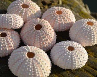 Pink Sea Urchin | Air Plant Accessory