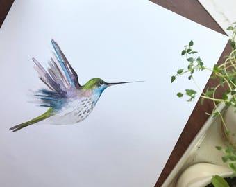 Watercolor Hummingbird / Fine Art Watercolor Art Print / UNFRAMED / 5 x 7 / 8 x 10 / 11 x 14