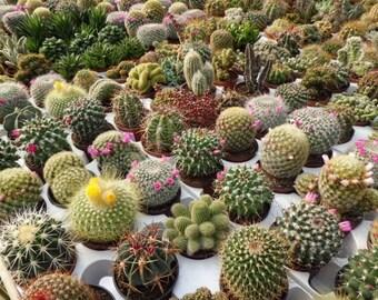 Cactus Garden Mix (50 through 1/8oz seeds) Trichocereus opuntia saguaro, etc 318