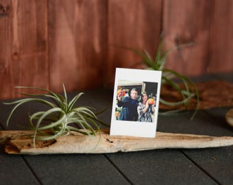 Air Plant With Photo Holder, Photo Holder, Business Card Holder