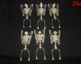 Taxidermy Bat Large Skeleton