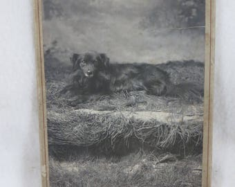 Great Antique Dog Photograph Vintage 1850s Black Shepard - Collie