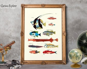 Coastal Art Poster, Fish Print Gift, Fish Art Decor, Tropical Fish Print, Bathroom Fish Prints, Sea Life Wall Decor - E21_1