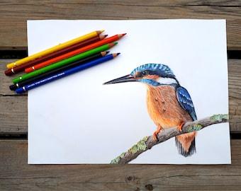 Bird illustration / Original Bird Drawing