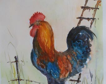 Rooster Limousin watercolor on arches paper
