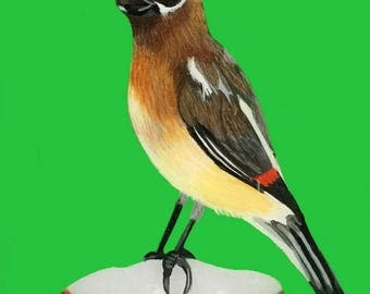 Cedar Waxwing Painting. Small Waxwing Painting. Bird Painting. Bird Home Decor