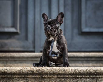 Minilink-Harness and leash for small dogs like Chihuahuas and yorkshire