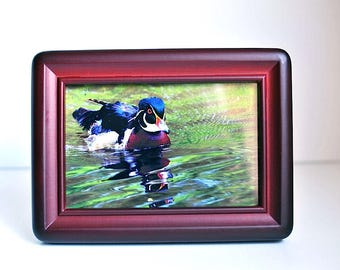 "Vintage Burgundy Red Molded Wood Picture Frame With Photo of Wood Duck / Fits a 4"" x 6"" Photo  / Standing Desk Photo Frame / Wood duck photo"