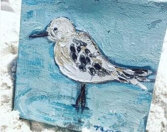 Seagull in seaside 3