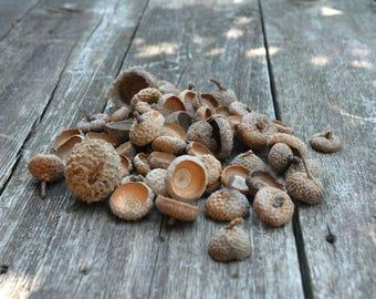 Natural Acorn Tops , set 2