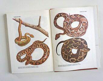 Vintage Illustrated Snake Book | Vintage Snake Illustrations | Snake Illustrations | Snake book