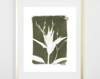 Green Botanical Cyanotype 1 PRINT / Handmade Art Print / Original Botanical Floral Cyanotype Photogram Art / 8x10