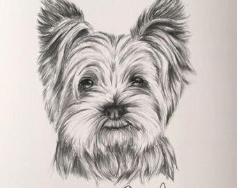 Sketched Yorkie Print