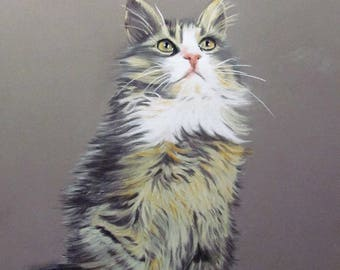 Brown and white tabby angora cat