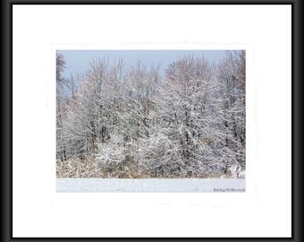 Ice Storm, Photography, Free Shipping, Print, Framed Print, Canvas Print, Framed Canvas, Nature Print, Wall Art, Home Decor Home Design, Art