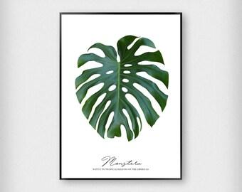 Monstera Print | Botanical | Green - Black | Tropical - Leaf - Poster