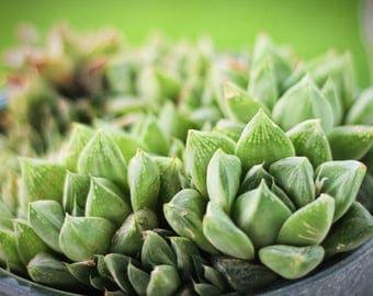 Bright Green Cactus Photo Print