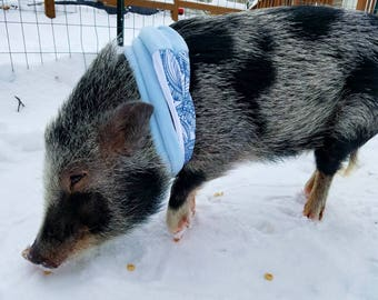Organic Mini pig infinity scarf