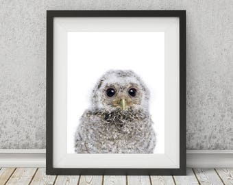 Owl Print, Owl Wall Art, Nursery Wall Art, Printable Art, Instant Digital Download, Baby Animals, Kid's Wall Art, Nursery Print, Bird Print